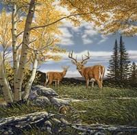 Woodland Meadows Fine Art Print