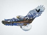 The Eagle Fine Art Print
