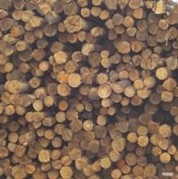 Logs Fine Art Print