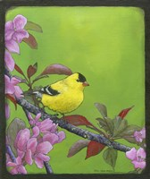 Goldfinch Fine Art Print