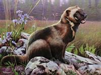 Open Field, Wolverine Fine Art Print
