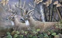 Blackberry Vines White Tail Deer Fine Art Print