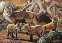 Front Porch Fox Family Fine Art Print