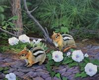 Morning Glory Chipmunks Fine Art Print