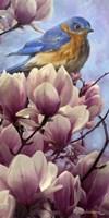 Bluebird Magnolias Fine Art Print