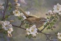 Wren And Apple Blossoms 2 Fine Art Print