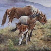 Family Ties the American Mustang Fine Art Print