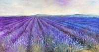 Lavender VI Fine Art Print