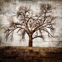 Cottonwood Tree Part 1 Fine Art Print