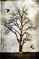 Cottonwood Tree Part 2 Fine Art Print