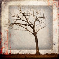 Cottonwood Tree Part 5 Fine Art Print
