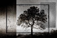 July Tree Fine Art Print