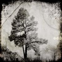 July Tree 12 Fine Art Print