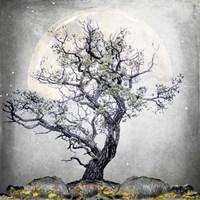 August Tree 5 Fine Art Print