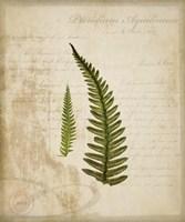 Scientific Plant 5 Framed Print