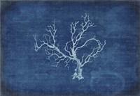 Gypsy Blue Cyanotype V1 Fine Art Print