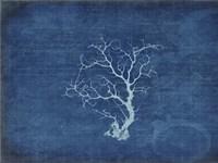 Gypsy Blue Cyanotype V2 Fine Art Print
