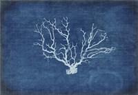 Gypsy Blue Cyanotype V3 Fine Art Print