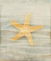 Gypsy Star 1 Fine Art Print