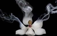 Smoking Magnolia Fine Art Print