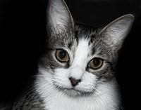 House Cat Fine Art Print