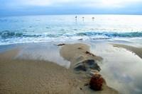 Zuma Beach, Ca Fine Art Print