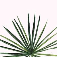 Statement Palms III Fine Art Print