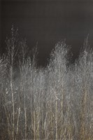 Silver Forest I Fine Art Print