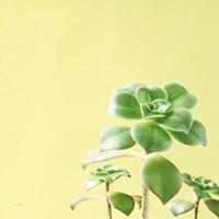 Succulent Simplicity X Fine Art Print