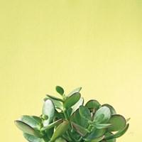 Succulent Simplicity III Framed Print