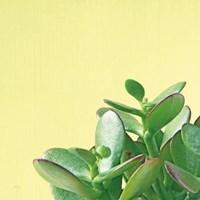 Succulent Simplicity IV Fine Art Print