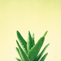 Succulent Simplicity V Framed Print