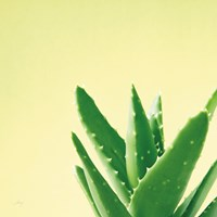 Succulent Simplicity VI Framed Print