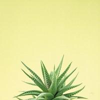Succulent Simplicity I Framed Print