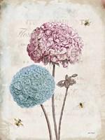 Geranium Study II Pink Flower Fine Art Print