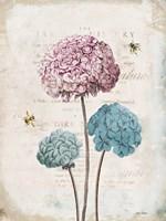 Geranium Study I Pink Flower Fine Art Print