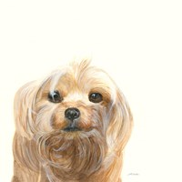 Little Scruff Gizmo Fine Art Print
