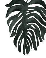 Tropical Palm II BW Framed Print