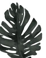 Tropical Palm I BW Fine Art Print