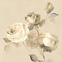 Rose Blossoms Crop Framed Print