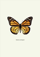 Yellow Butterfly Fine Art Print