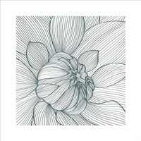 Myrrhis Odorata I Fine Art Print