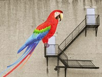 Escape from your cage Fine Art Print