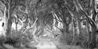 The Dark Hedges, Ireland (BW) Fine Art Print