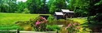 Trees around a Watermill, Mabry Mill, Blue Ridge Parkway, Floyd County, Virginia Fine Art Print