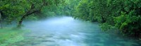 Creek flowing through a Forest, Ozark National Scenic Riverways, Ozark Mountains, Missouri Fine Art Print