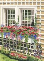 Butchart Gardens Window Box Fine Art Print