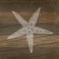 Rustic Starfish - White Fine Art Print
