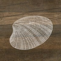 Rustic Shell - White Fine Art Print