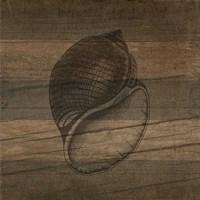 Rustic Conch Fine Art Print